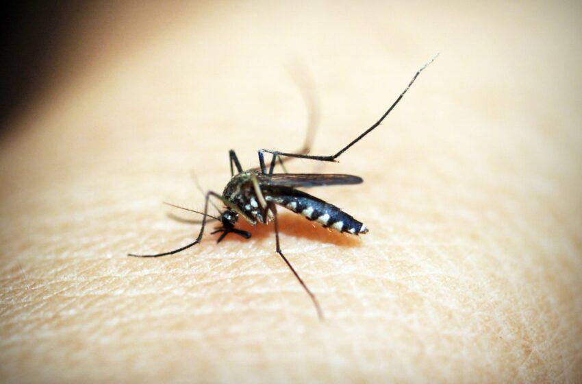 Hoe kom ik van muggen af?